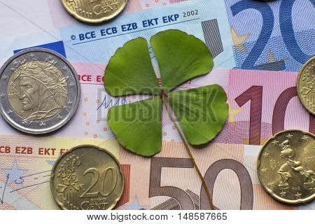 Four leaf clover shape luck plant celebration