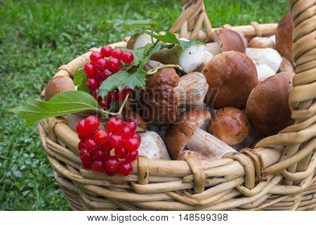 Noble White Mushrooms In Basket