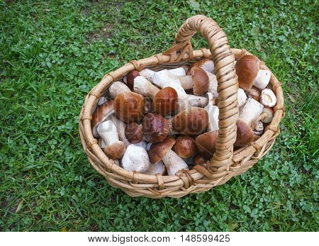 Noble White Mushrooms In A Wicker Basket