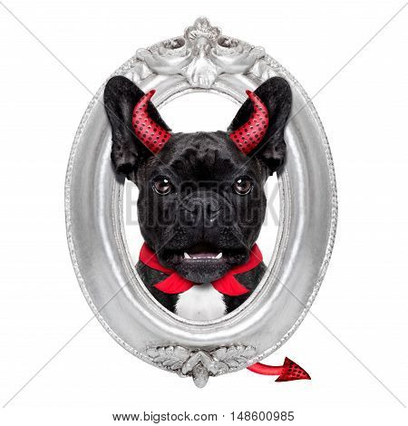 Halloween Dog  Frame