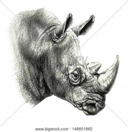 Pencil drawing. rhino's head in profile isolated on white background