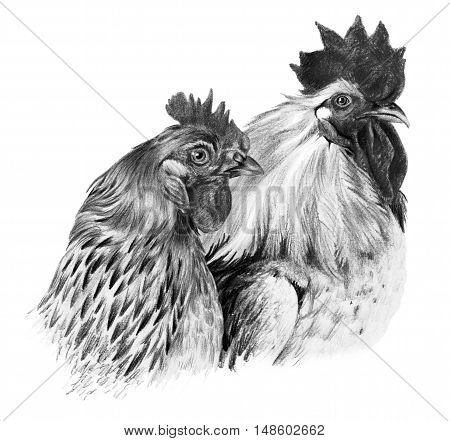 Graphic drawing. Hen and on white background