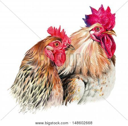 Color drawing with watercolor pencils. Hen and on white background