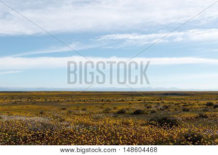 Huge Open Empty Flat Green Landscape In Tankwa Karoo
