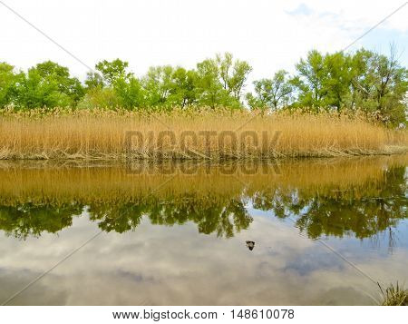 River in a forest on summer day