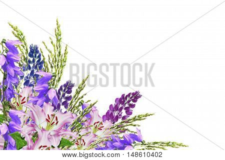 Blue lupines beautiful flowers on a white background. bellflower