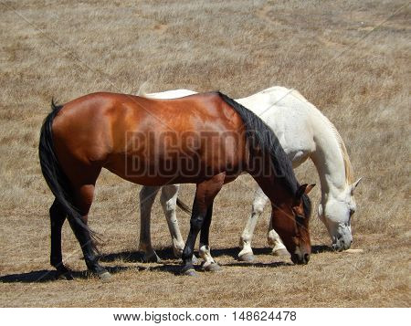 Roaming horses on a ranch captured in California