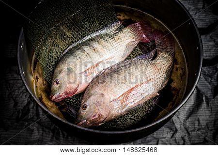 Fresh Tilapia Or Nile Tilapia In Pot