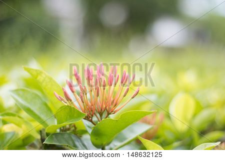 Spike flower background green close up Blur background