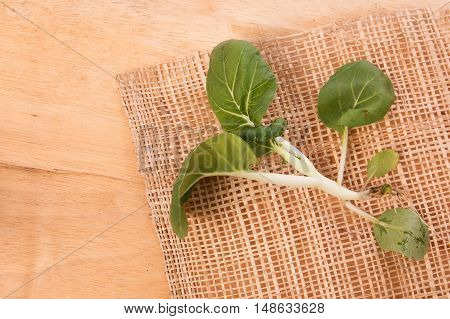 green bok choy vegetable on wooden background