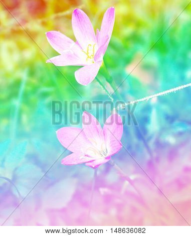 Pink flower growing in the meadow background