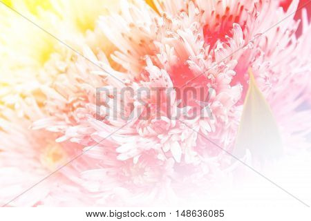 Colorful chrysanthemum flowers background at market flower