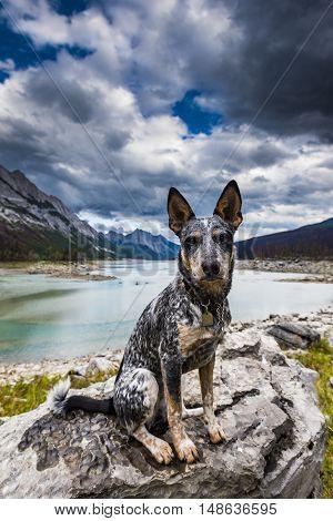 Hiking Puppy