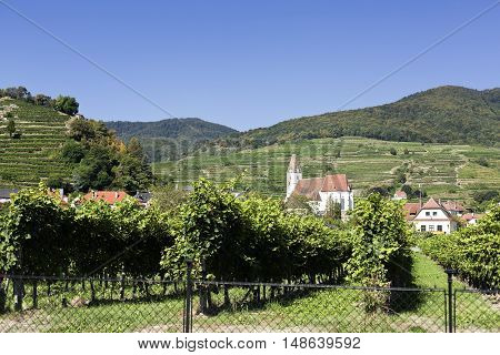 View of the Spitz gothic church through the vineyards of the Wachau Wine Region in Austria