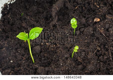 Young Plants Sprouting At Closeup