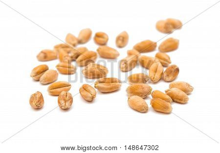 wheat grain agriculture isolated on white background