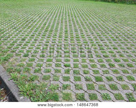 Weeds In Cobble Stones