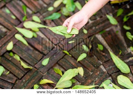 Leaf In Small Hand