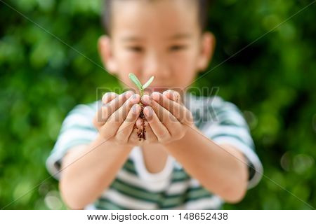 Young Seedling In Little Hands