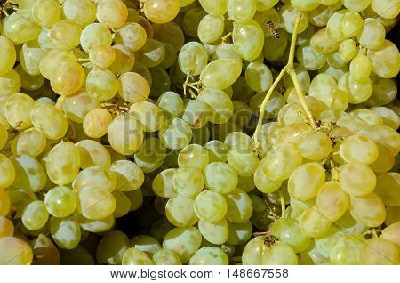 fresh green grapes background. texture. Georgia Tbilisi