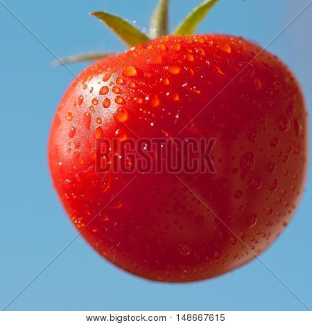 Cherry tomato after rain on blue sky background close-up view selective focus