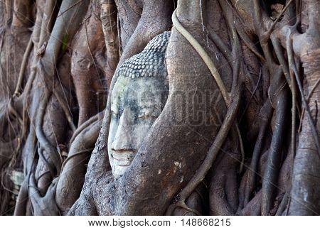 Ancient Buddha's Head in Tree Roots at Wat Phra Mahathat in Ayutthaya Thailand