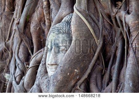 Ancient Buddha's Head in Tree Roots at Wat Phra Mahathat in Ayutthaya, Thailand