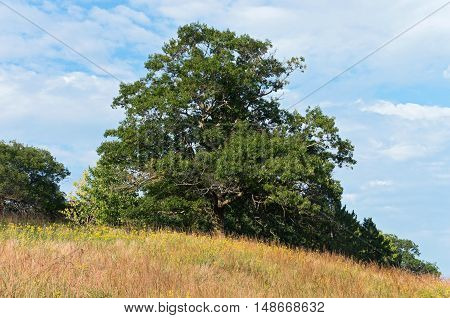 deciduous and coniferous trees on grassy hill of prairie in chaska minnesota