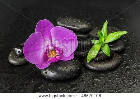 Spa concept with black basalt massage stones pink orchid flower and lush green foliage covered with water drops on a black background