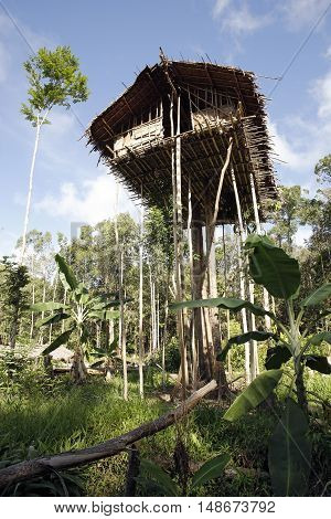 Korowai Treetop House Deep Inside the Forest. Papua Indonesia