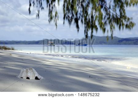 Sea Shell in the Sand with Boats in the Background. Dampier Strait Raja Ampat Indonesia