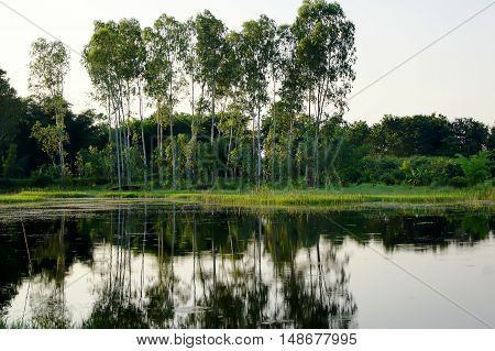 A Large Tree Shaded Lake Calm Falls Lake Lake Peaceful Trees Shade The Incident Lake.
