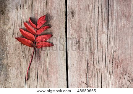 Little twig with autumn red leaves on an old shabby wooden board. Shot from above. Can be used a s a background.