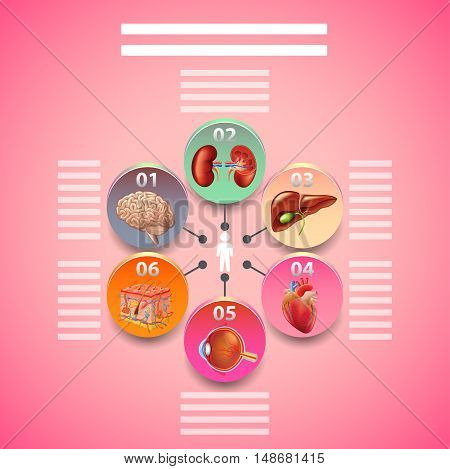 Science infographics with human organs in circles vector background