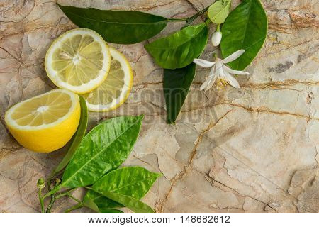 Lemon And Slices Of Lemon Decorated With A Blossoming Lemon Tree