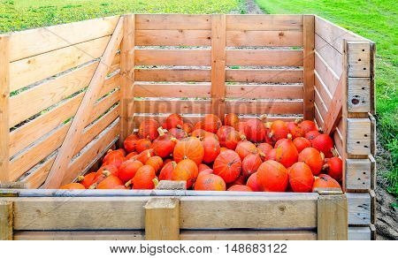 Partially filled wooden harvest crate with a heap of picked small orange pumpkins at the edge of a field in the end of the summer season.