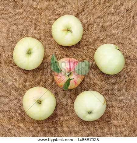 flat lay from apples laid out in a simple linen cloth top view / harvest natural fresh fruit
