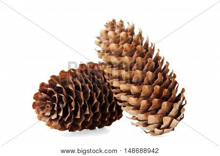Conifer cone, fir cone or fir apple on white background.