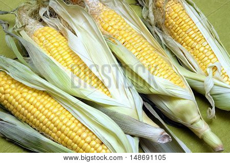 Ripe raw corn on the cob on green tablecloth top view diagonal closeup