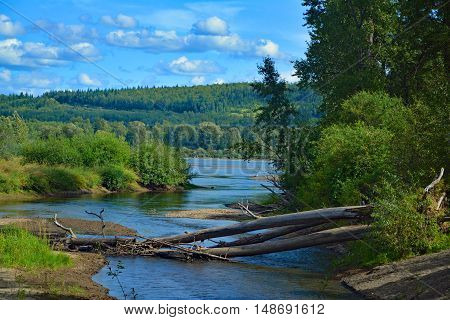 Landscape with trunks in the river, bushes, trees and blue sky Cottonwood Island Park Prince George Canada