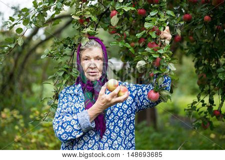 An elderly woman in an Apple orchard.