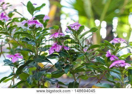 Beautiful asian flowers outdoor, Bali, Indonesia. Outdoor.