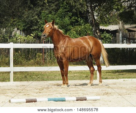 red horse with a white spot on it's head is in the paddock next to white fence