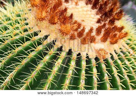 Close up of globe shaped cactus .