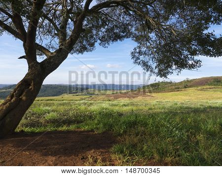 Tree shadow inclined trunk sheets branches green