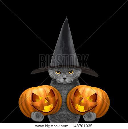 Cute cat in a costume with two halloweens pumpkins -- isolated on black