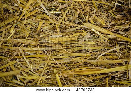 Hey seamless background. In pile of straw texture background. Image of dried yellow hay pattern texture background.