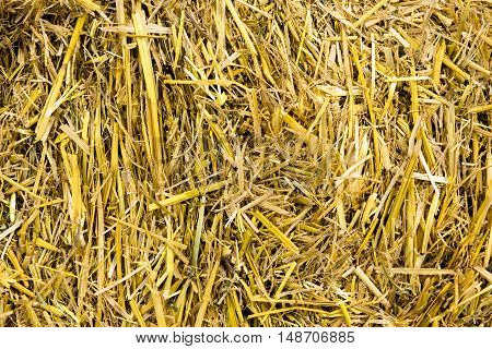 Closeup picture of yellow golden straw bale showing texture and looses straws. Hay background. Texture concept.