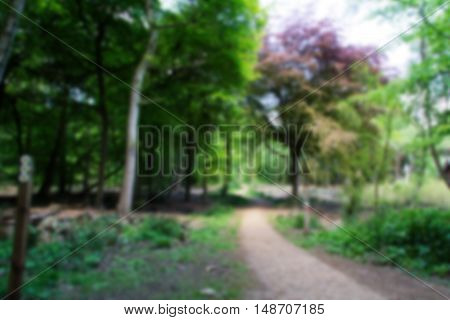 Countryside Walk With Path Winding Through Trees Out Of Focus.