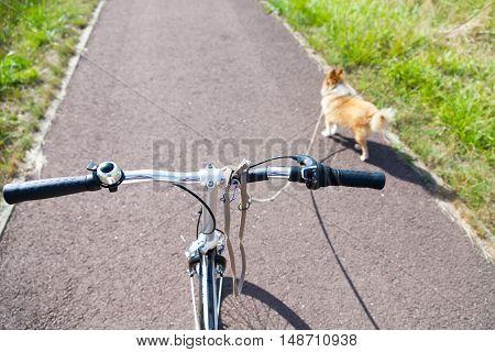 a dog with leash on a bike